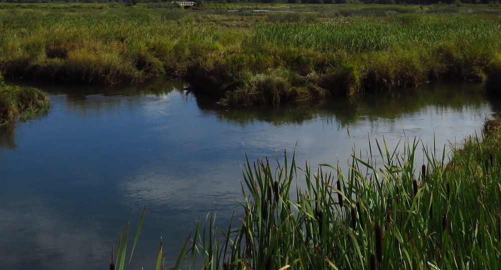 Wetlands with grassy areas and a reflection of the sky.